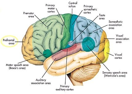 Functional Map of the Brain